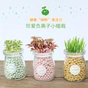 迷你桌面负离子小盆栽微景观DIY创意小花农水培陶粒植物